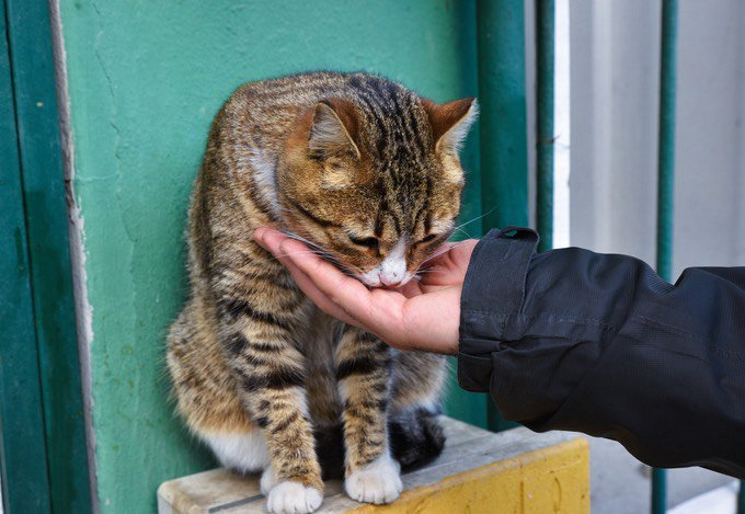 nourrir chat errant