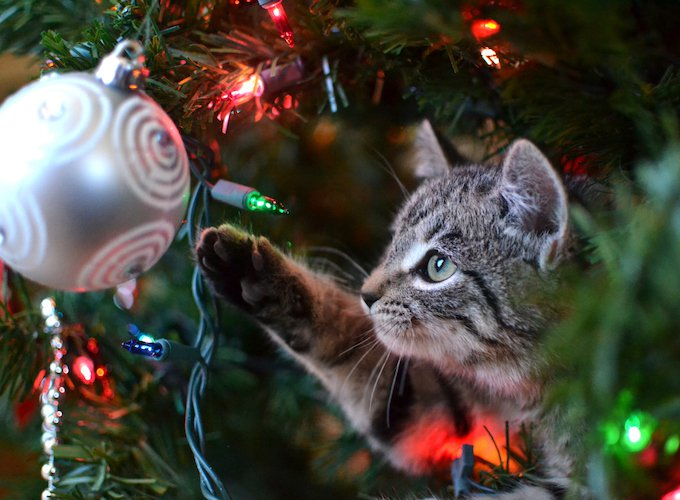 How To Keep Cats Away From Christmas Tree.4 Tips To Keep Your Christmas Tree Standing This Year