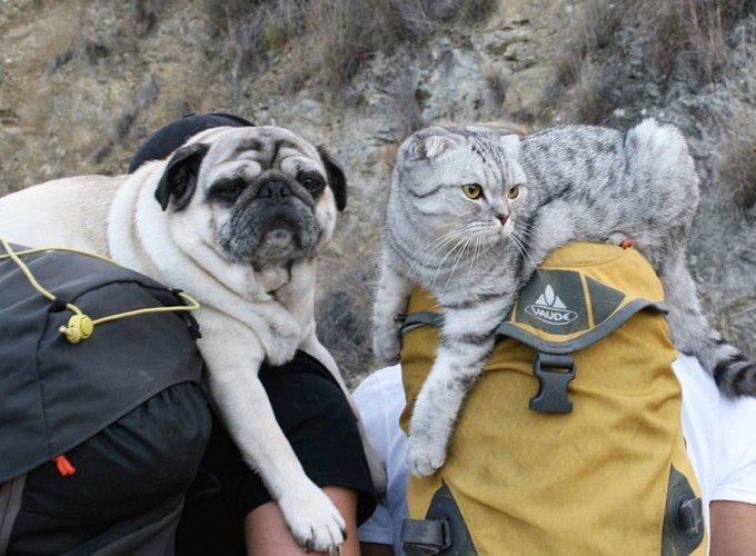 chat et chien voyageurs