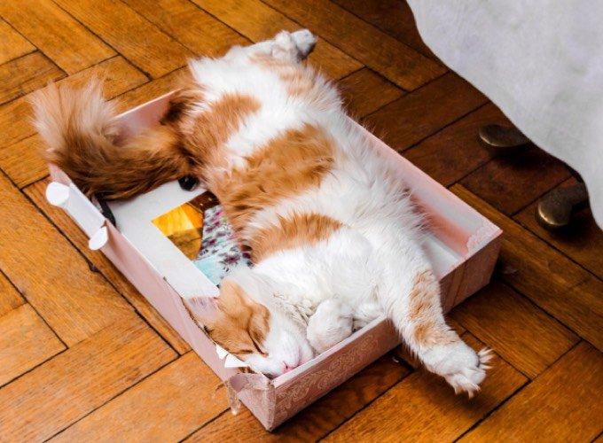 chat dort boite