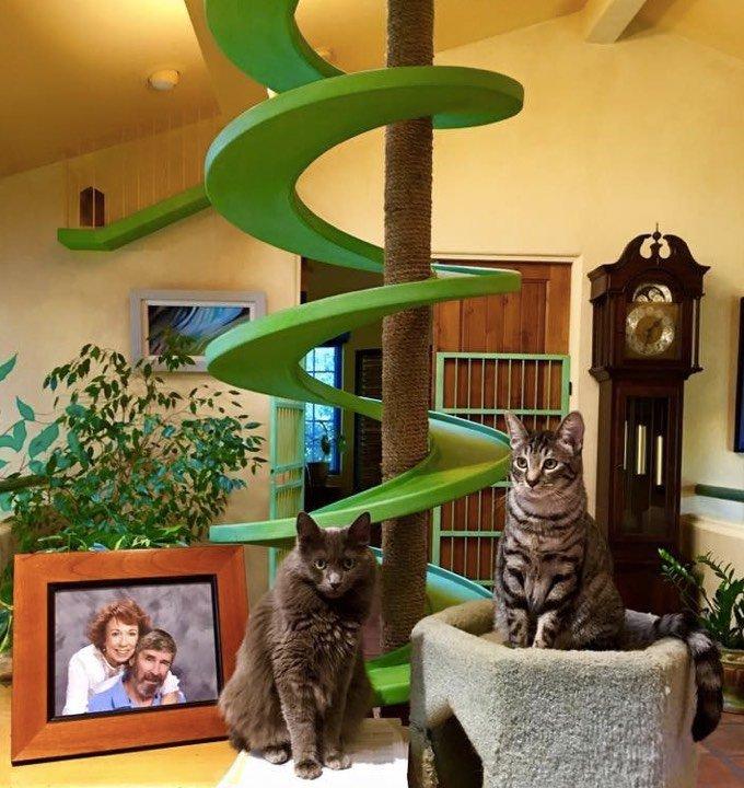 paradis chats californie