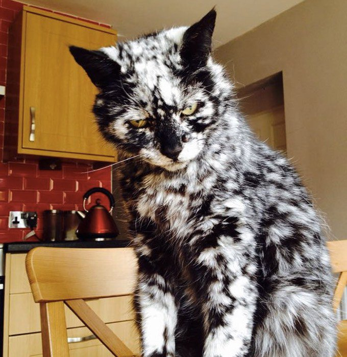 Scrappy chat vitiligo