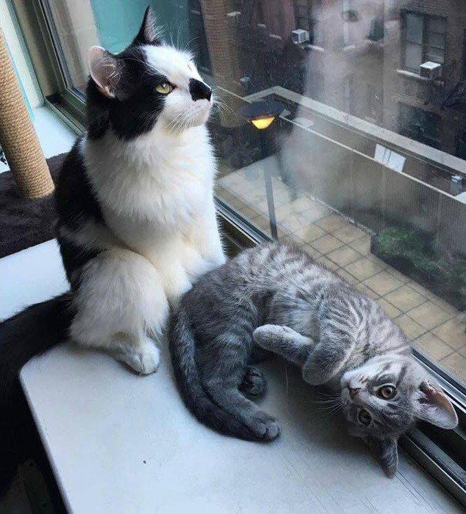 chaton adoption