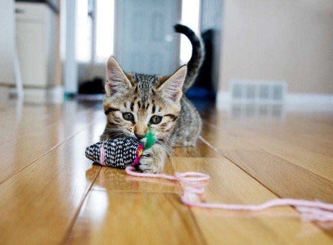 chat heureux jeu