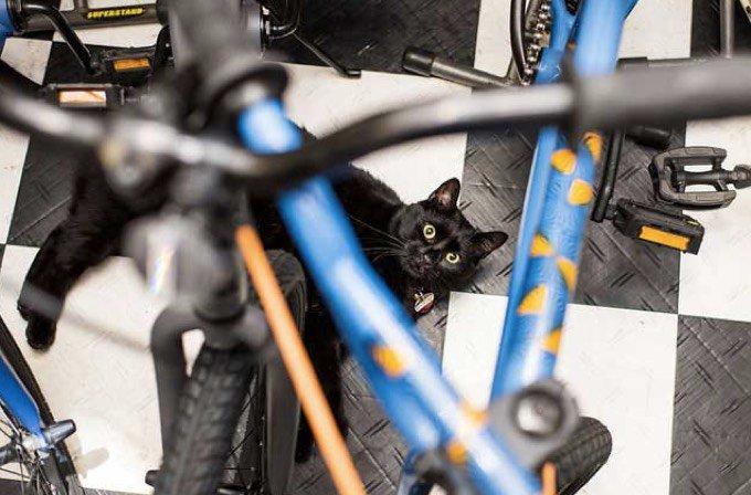 chat dans un commerce de new york