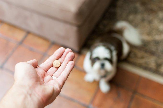 traitement homéopathique pour chien