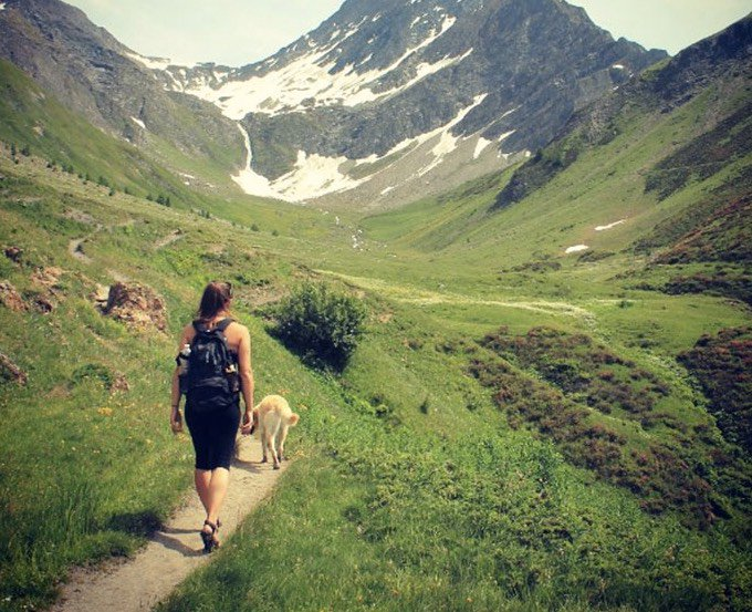 road trip van avec un chien