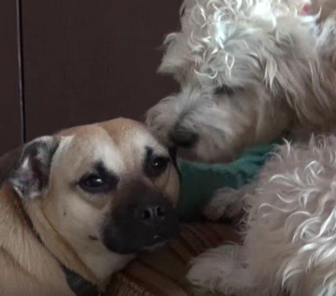 angel et le chien de la famille