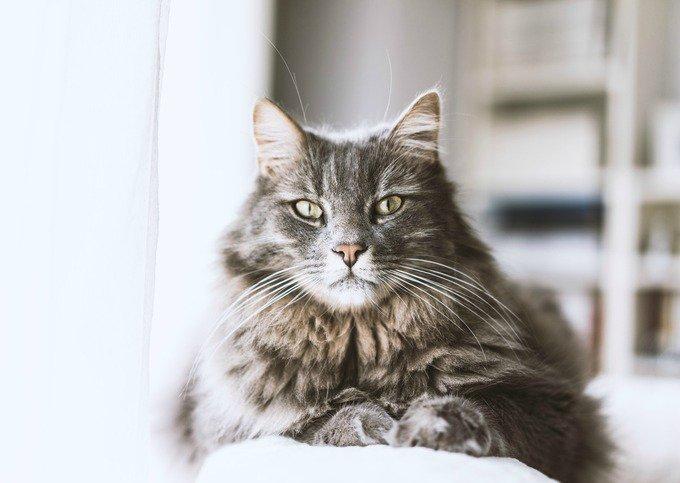 5 choses que votre chat aimerait pouvoir vous dire