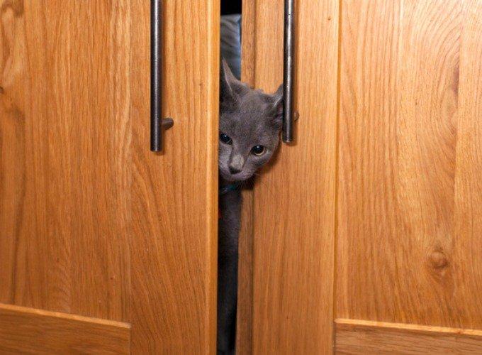 chat dans une armoire