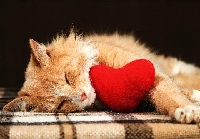 saint valentin avec votre animal