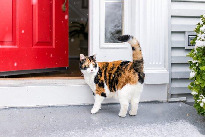 un chat calico