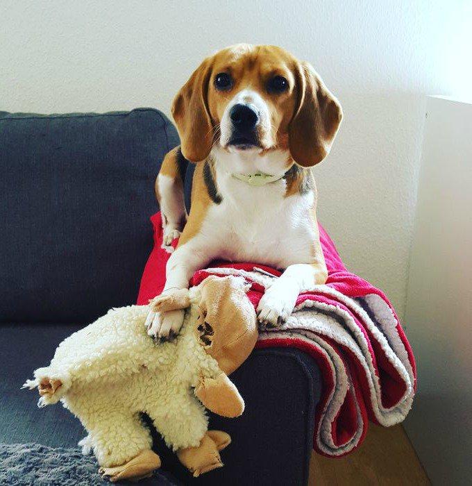moira beagles