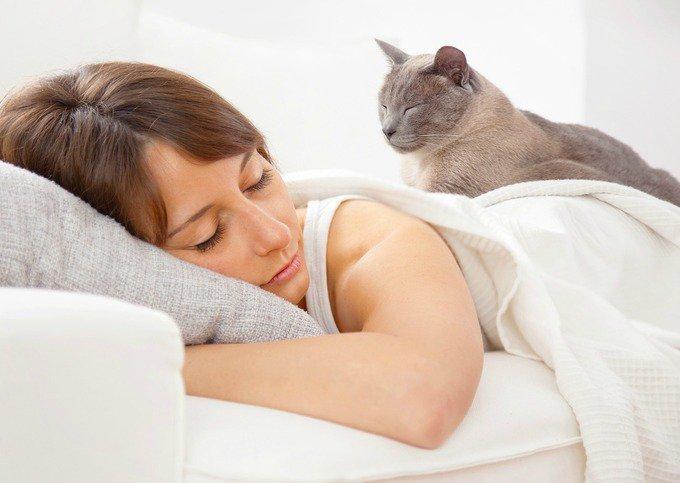 chat qui dort sur un lit