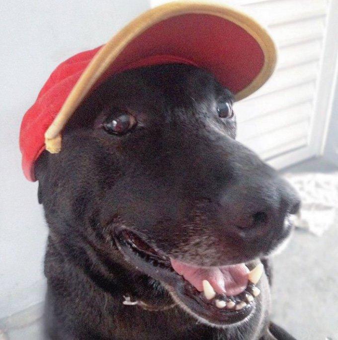Petrol Store Dog 1