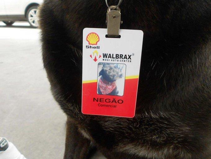 Petrol Store Dog 3