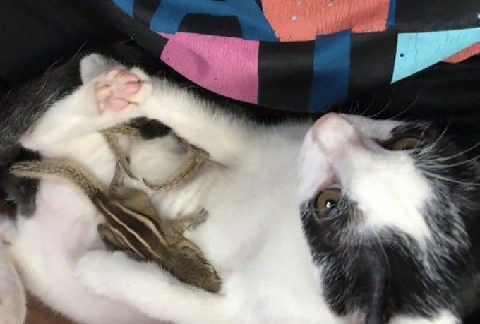 chat ami écureuil