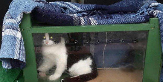 felix chat noir et blanc