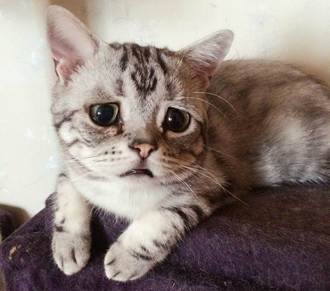 le chat le plus triste du monde