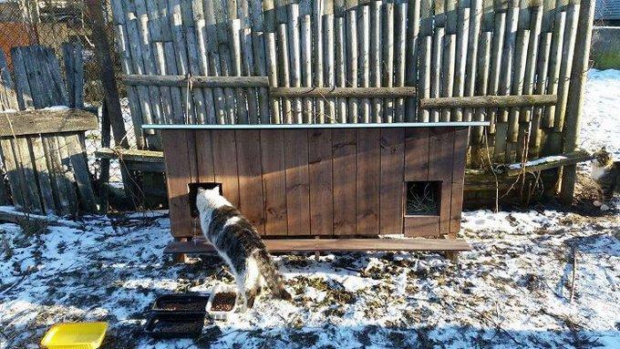 maison en bois chats errants riga