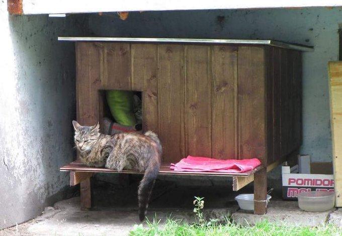 maison de bois chats errants riga