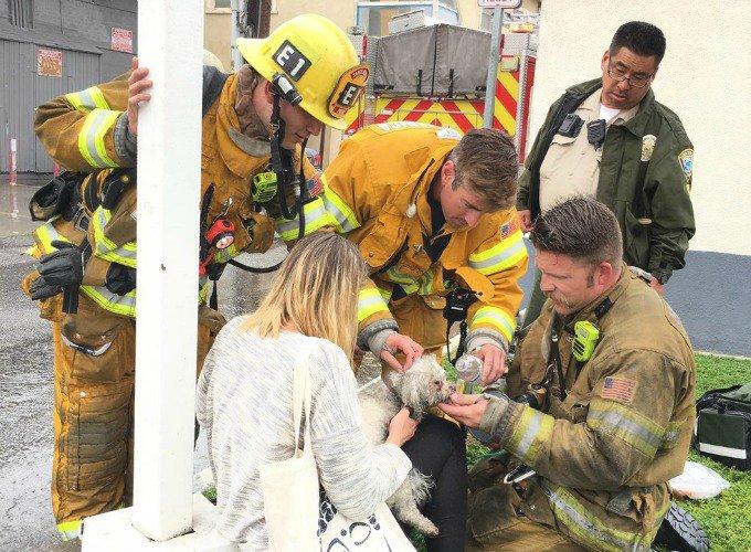 sauvetage de marley par un pompier