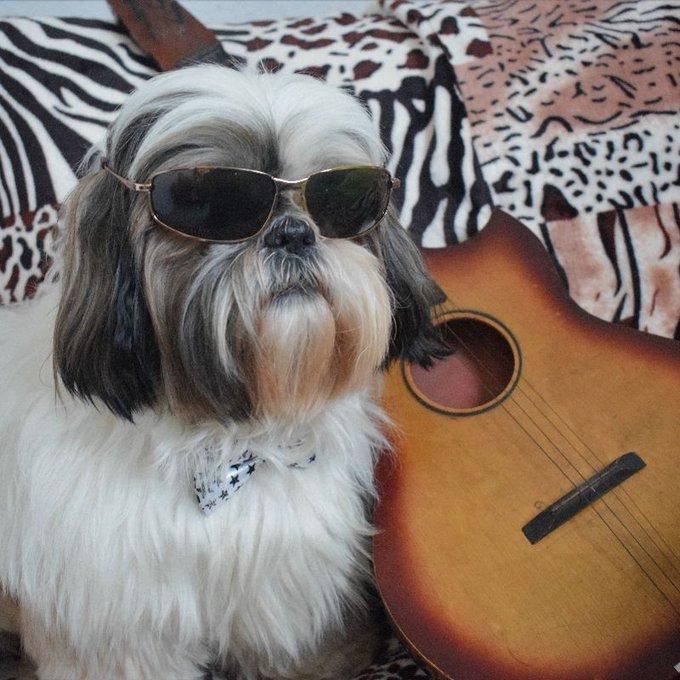 chien guitare