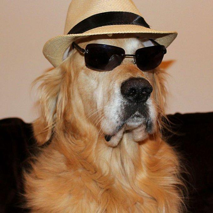 golden chapeau lunettes