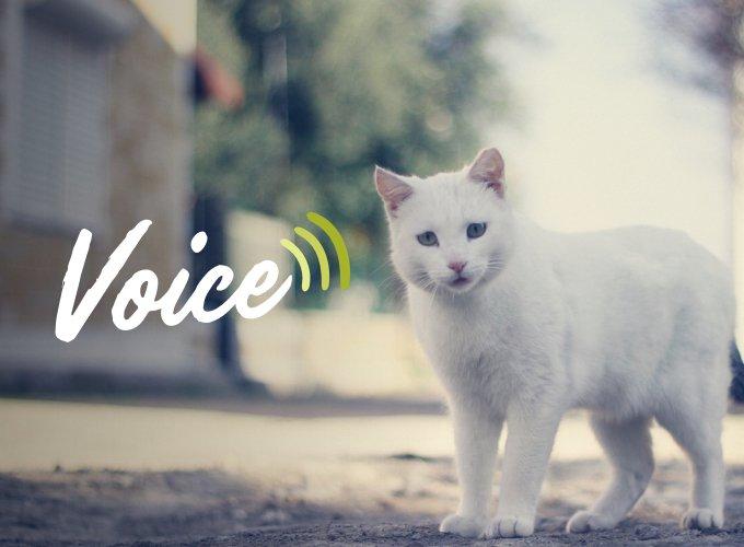 programme voice stérilisation chats errants