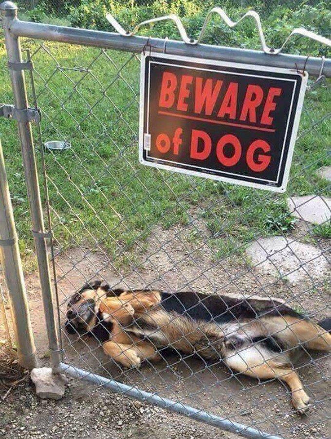 chien dangereux