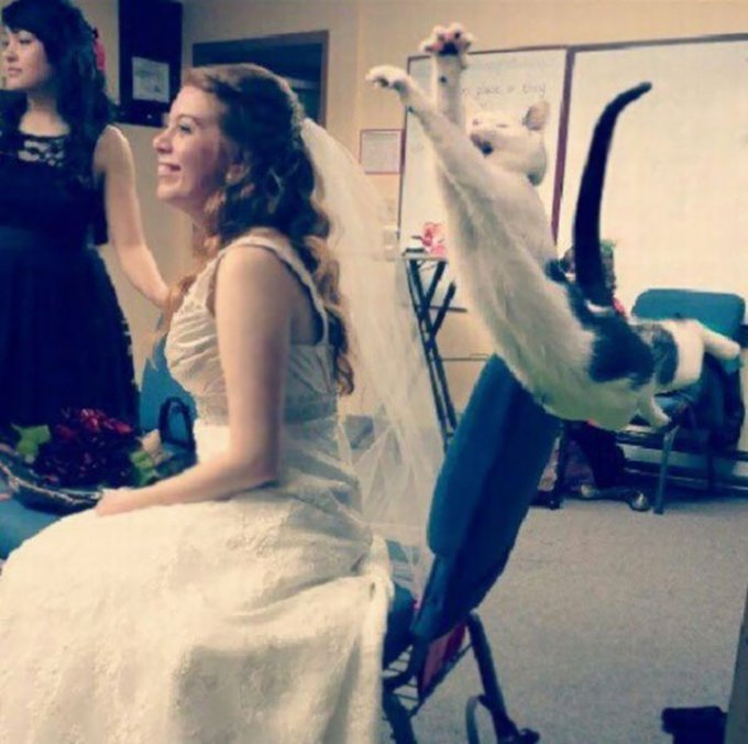 chat voile mariée