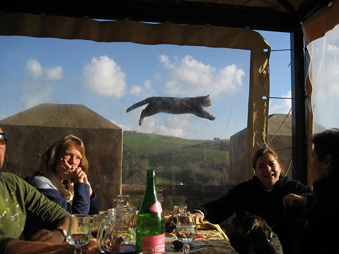 chat volant
