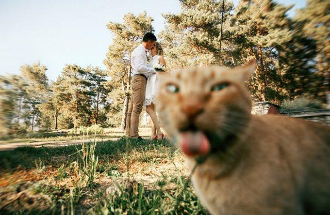 chat roux langue