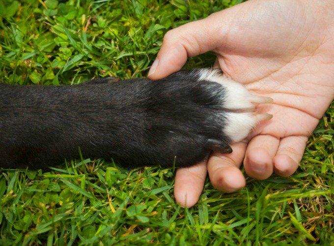couper les ongles de son chien