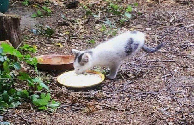 chaton deux pattes