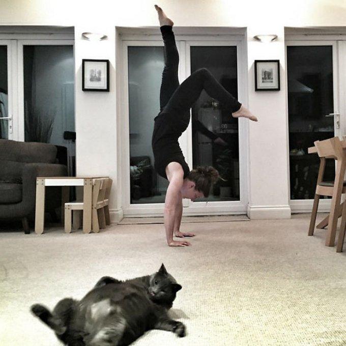 chat noir yoga