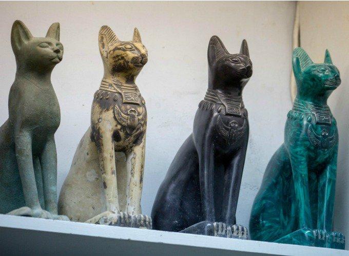mythes sur les chats