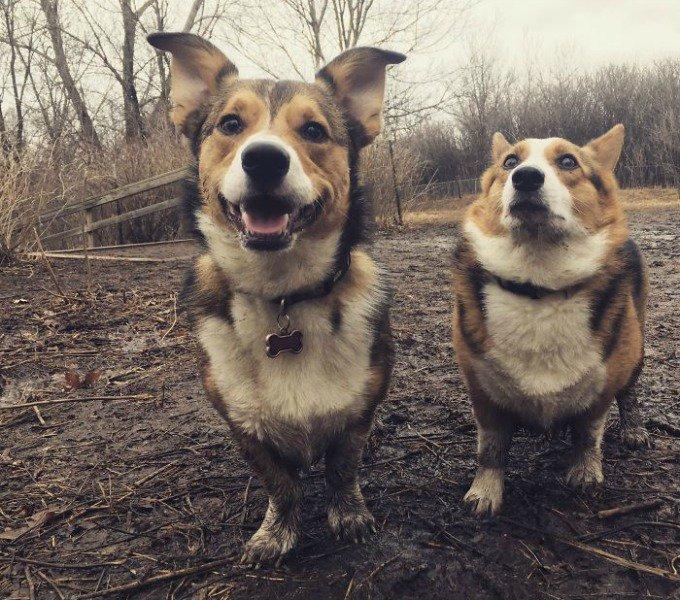 chien dans la boue