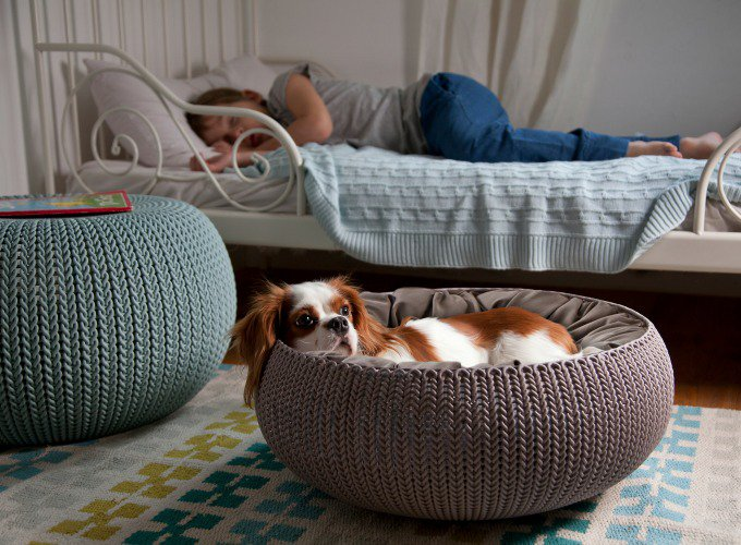 cozy pet bed by curver