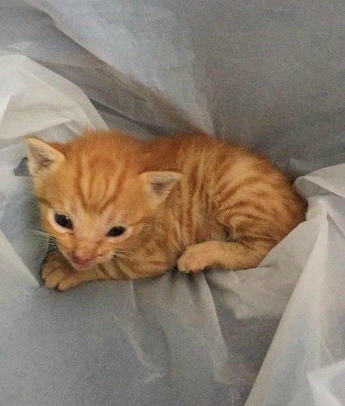 sauvetage du chaton