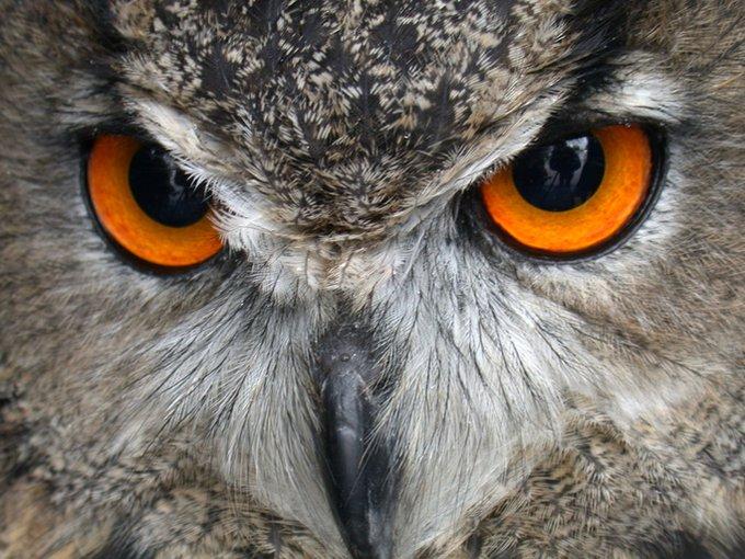 yeux hiboux