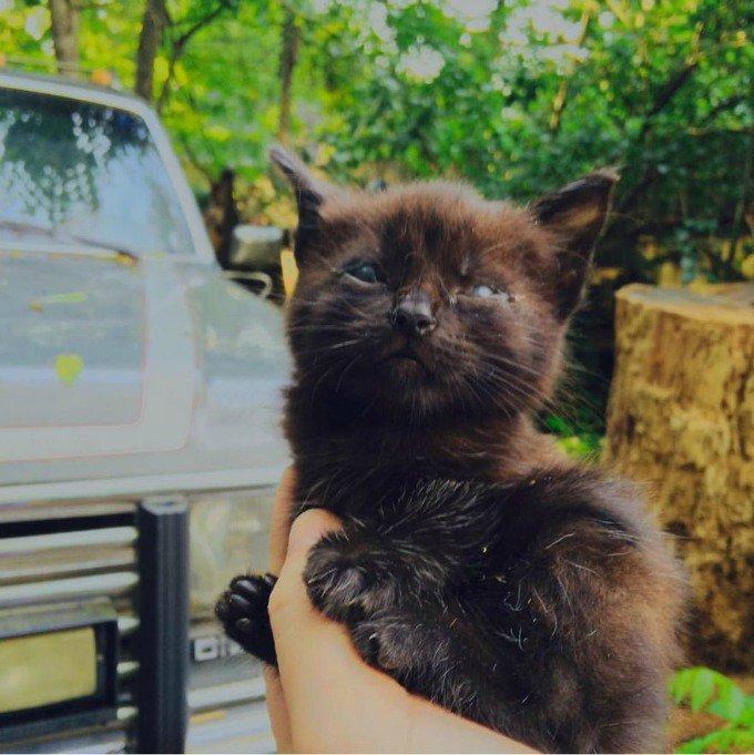 chaton noir sans paupières