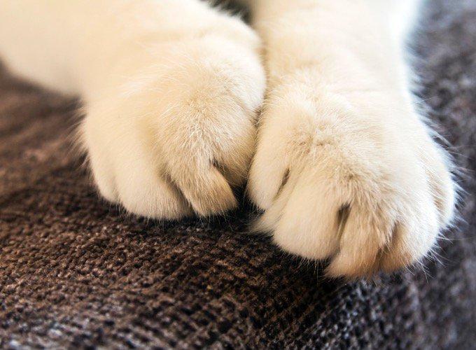 patas-gato
