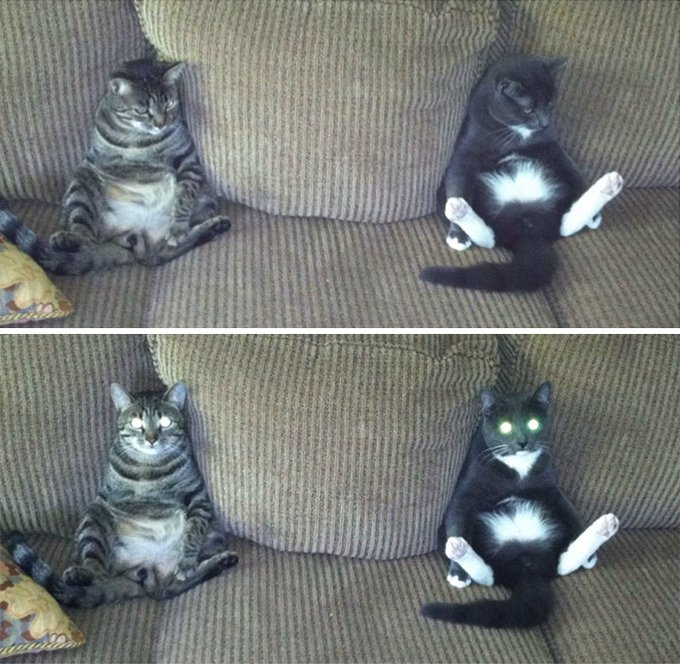 chat assis canapé