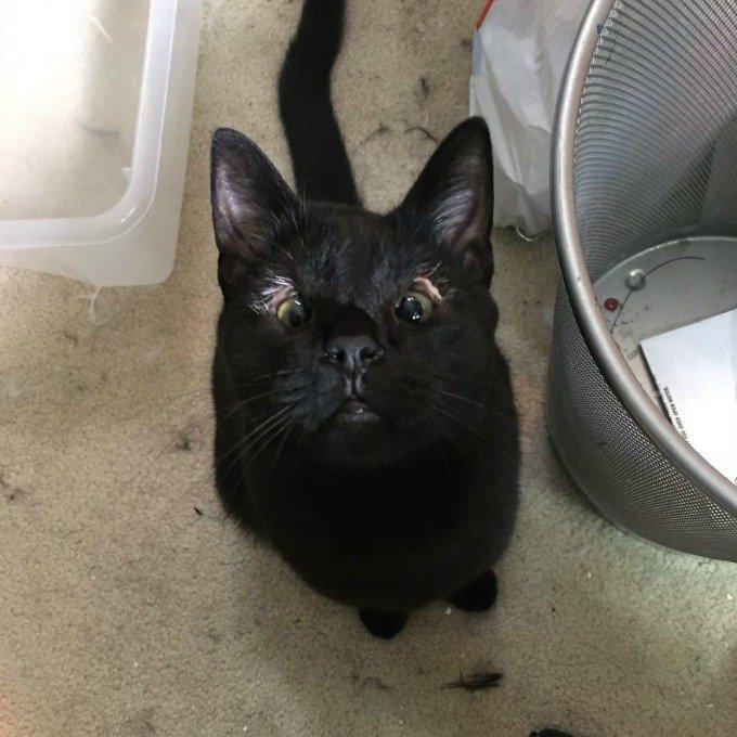 chat noir sans paupières