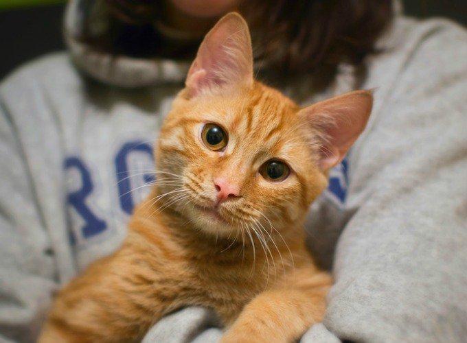 câlineur de chats