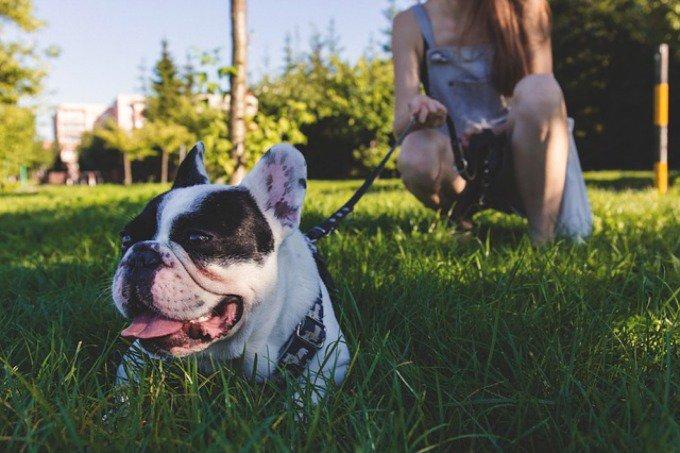 dogbuddy garde chien