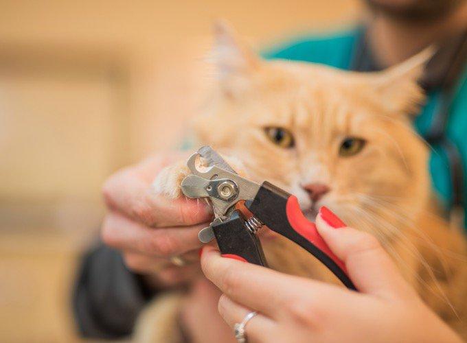 cortar-uñas-gato