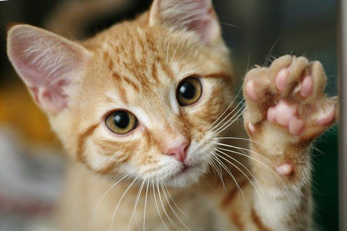 des pattes de chat