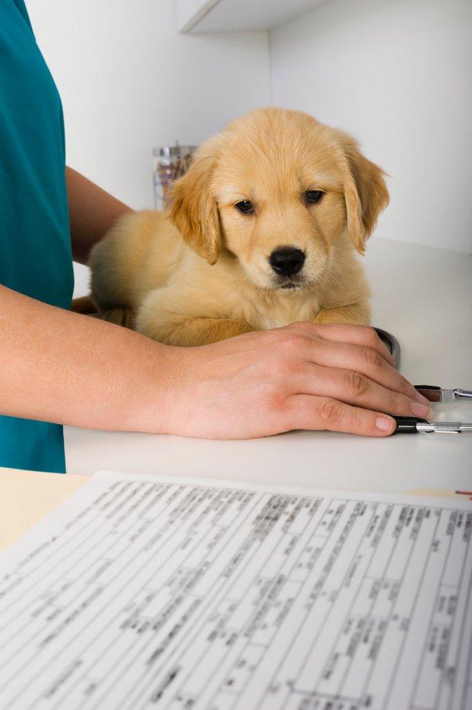 carnet de santé du chien et du chat